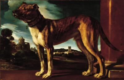 Aldrovandi Dog, Guercino. Image c/o The Norton Simon Museum.